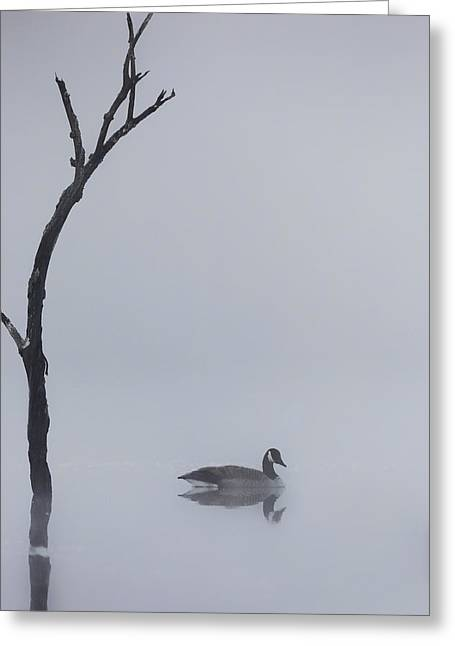 Geese Greeting Cards - Goose Of The Fog Greeting Card by Bill  Wakeley