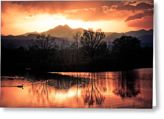 Sunset Prints Photographs Greeting Cards - Goose On Golden Ponds 1 Greeting Card by James BO  Insogna