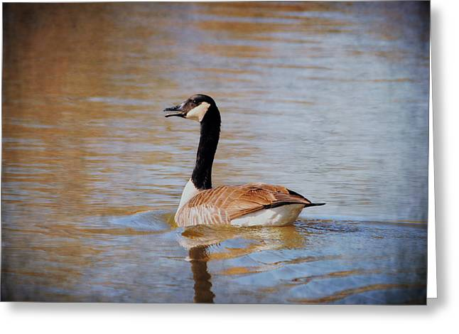 Geese Greeting Cards - Goose on the Water Greeting Card by Jai Johnson