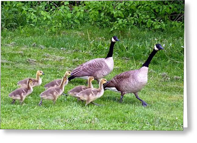 Intrigue Greeting Cards - Goose Step Greeting Card by Will Borden