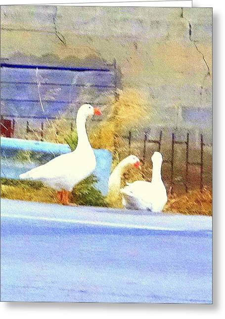 Mental Process Greeting Cards - Goose Trio Greeting Card by Hilde Widerberg