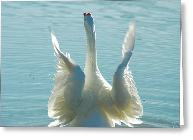 Tam Ryan Greeting Cards - Goose Wings Greeting Card by Tam Ryan