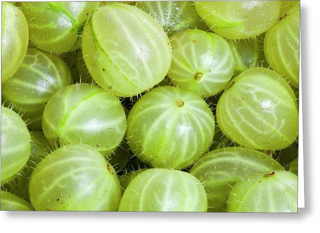 Gooseberries Greeting Card by Ashley Cooper