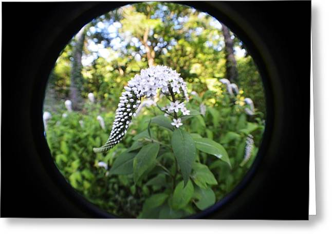 Gooseneck Loosestrife Greeting Cards - Gooseneck With A Fisheye Greeting Card by Carrie Munoz