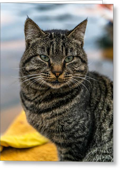 Wicked Kitty Greeting Cards - Gorgeous cat Greeting Card by Julian Popov