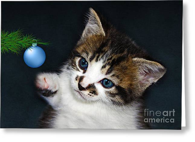 Terri Waters Greeting Cards - Gorgeous Christmas Kitten Greeting Card by Terri  Waters