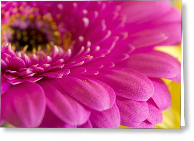 Moyers Greeting Cards - Gorgeous Pink Flower Greeting Card by Dana Moyer