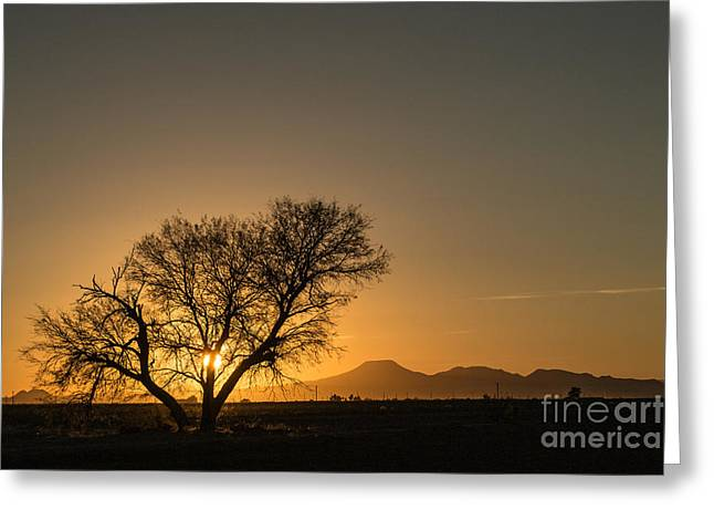 Sunset Posters Greeting Cards - Gorgeous Sunset 12 27 13 Greeting Card by Beverly Guilliams