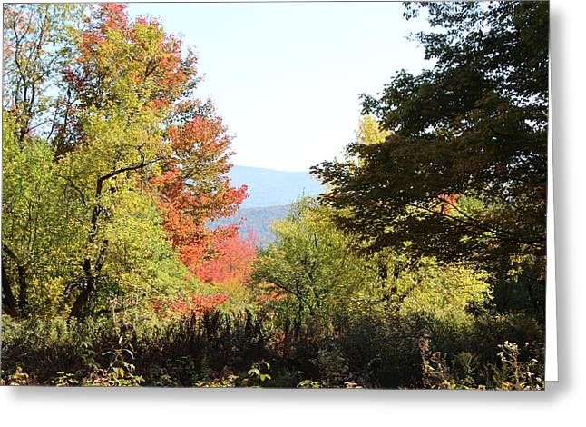 Charlotte Vermont Greeting Cards - Gorgeous Vermont Greeting Card by William Alexander