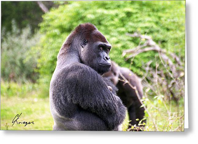 Nature Phots Greeting Cards - Gorilla Greeting Card by Christopher Krieger