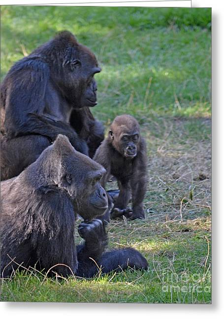 Love The Animal Greeting Cards - Gorilla Family Relaxing Together Greeting Card by Jim Fitzpatrick