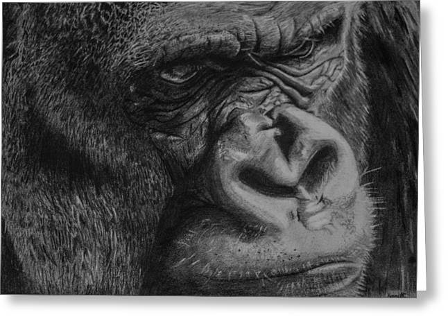 Gorilla Face Line Drawing : Silverback gorilla drawings pictures to pin on pinterest