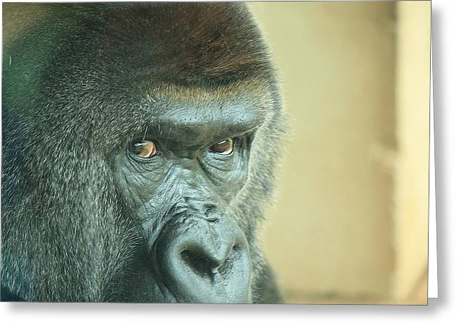 Gorilla's Look Greeting Card by Adnan Elkamash