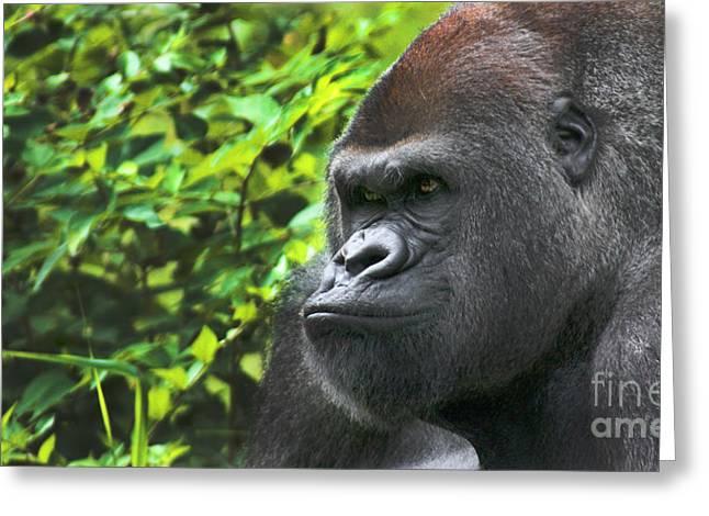 the hairy ape summary pdf