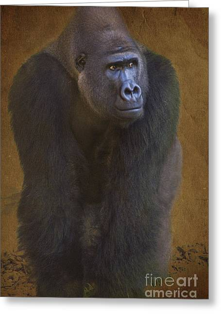 Zoologic Greeting Cards - Gorilla the Muscleman Greeting Card by Heiko Koehrer-Wagner