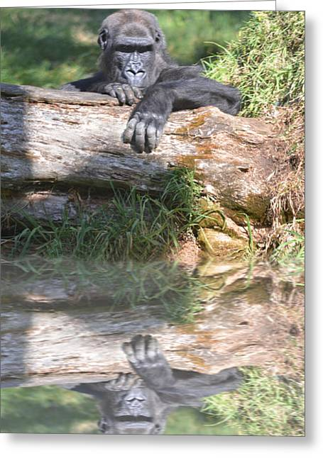 Bonding Digital Art Greeting Cards - Gorilla Watching Behind a Tree Greeting Card by Jim Fitzpatrick