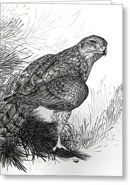 Grayscale Drawings Greeting Cards - Goshawk Gaze Greeting Card by Cara Bevan