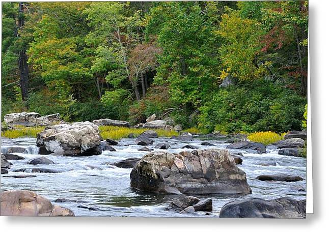 Trout Stream Landscape Greeting Cards - Goshen Pass 2 Greeting Card by Todd Hostetter