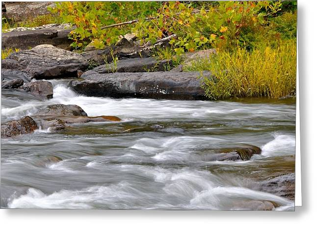 Trout Stream Landscape Greeting Cards - Goshen Pass 5 Greeting Card by Todd Hostetter