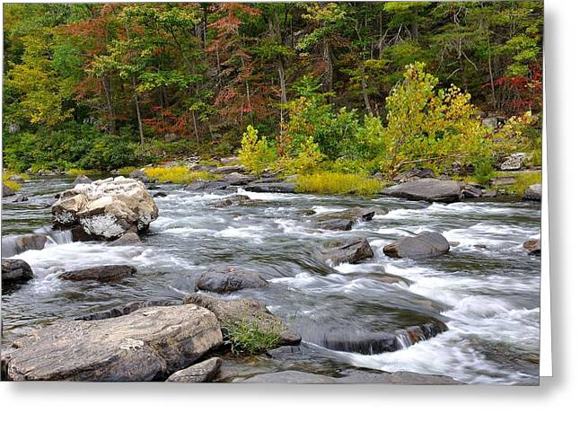 Trout Stream Landscape Greeting Cards - Goshen Pass 6 Greeting Card by Todd Hostetter