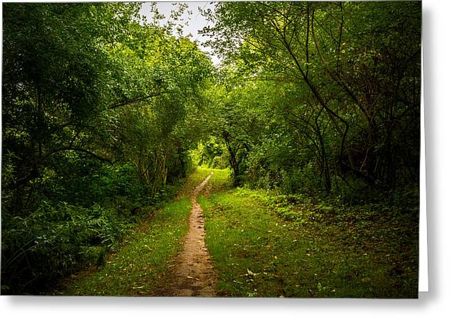 Rochester Artist Greeting Cards - Gosnell Big Woods Trail Greeting Card by Tim Buisman