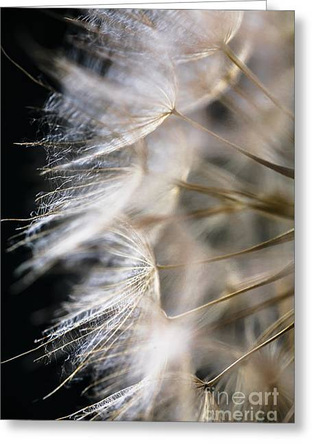 Wishes Greeting Cards - Gossamer Greeting Card by Jan Bickerton