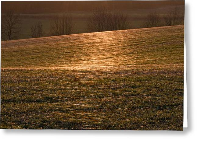 Spiderwebs Greeting Cards - Gossamer spider webs in a field Greeting Card by Science Photo Library
