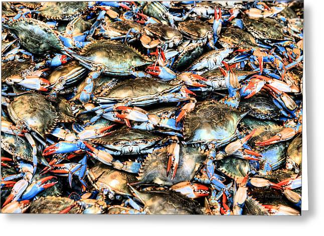 Delmarva Greeting Cards - Got Crabs Greeting Card by JC Findley