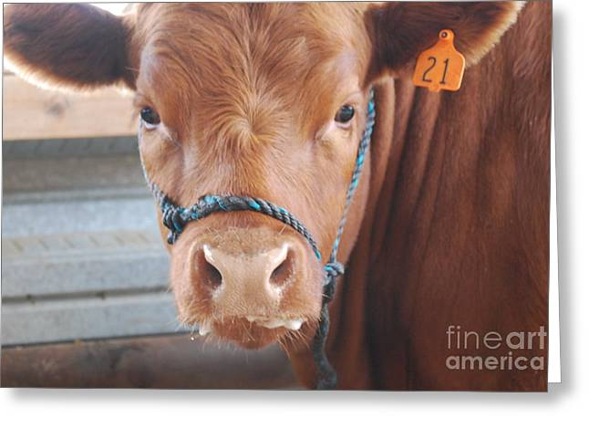 Slobber Greeting Cards - Got Milk Greeting Card by Jamie Riley