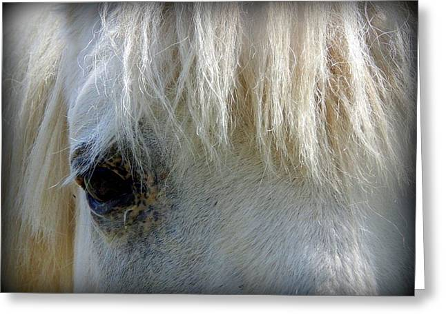 Eyelash Greeting Cards - Got my eye on you Greeting Card by Karen Cook