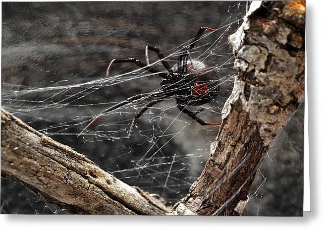Black Widow Greeting Cards - Got Silk Greeting Card by Jim Baines