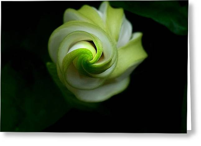 Daughter Gift Greeting Cards - Got Swirl Greeting Card by Jill Jacobs