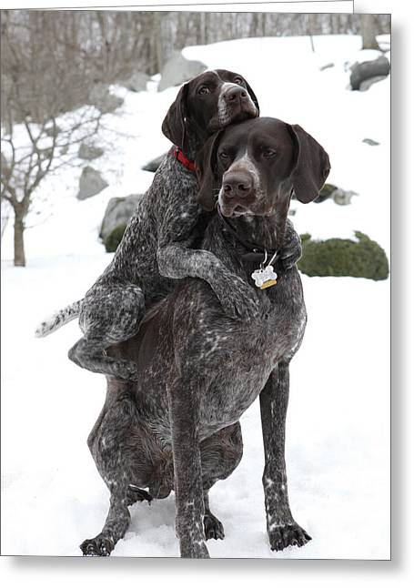 Pointer Greeting Cards - Got your Back Greeting Card by Kimberly Petts
