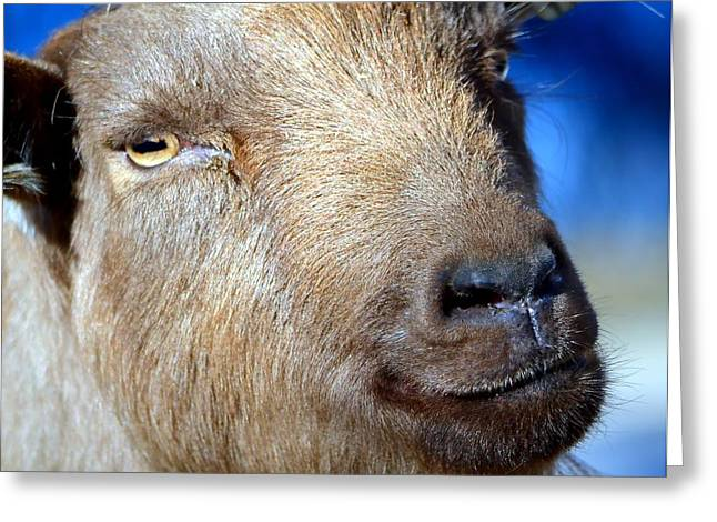 Gray Hair Greeting Cards - Got Your Goat Greeting Card by Deena Stoddard