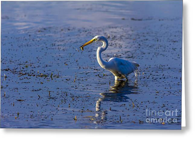 Wading Bird Greeting Cards - Gotcha Greeting Card by Marvin Spates
