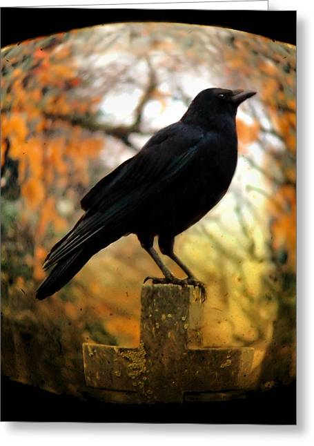 Bird On Tree Greeting Cards - Gothic Fish Eye Greeting Card by Gothicolors Donna Snyder