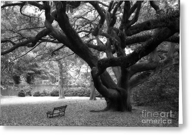 Park Scene Photographs Greeting Cards - Gothic Surreal Black and White South Carolina Angel Oak Trees Park Landscape Greeting Card by Kathy Fornal