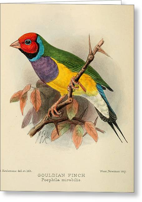 Finch Greeting Cards - Gouldian Finch Greeting Card by J G Keulemans