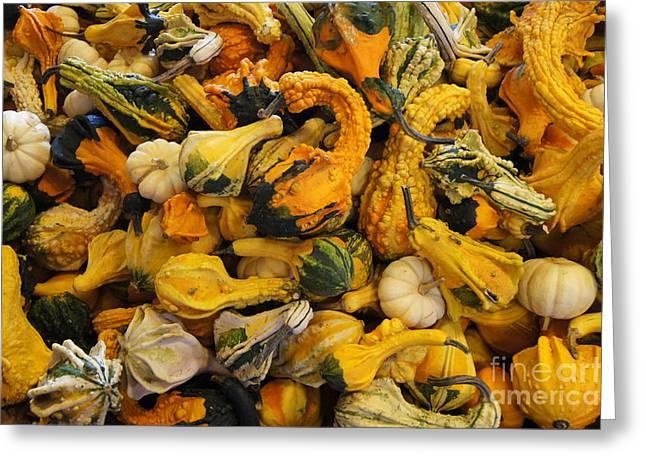 Farmstand Greeting Cards - Gourds 2 Greeting Card by Dawn Puliafico