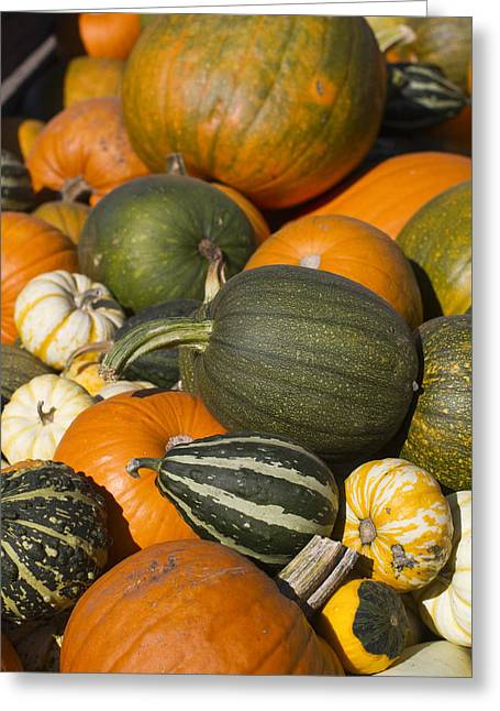 Orange Pumpkin Greeting Cards - Gourds Greeting Card by Rebecca Cozart
