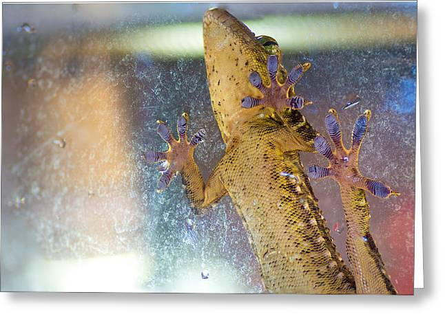 Gecko Print Greeting Cards - Grab a hold Greeting Card by Bruno Rosa