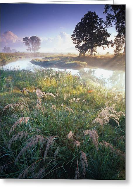 Grab Some Grass Greeting Card by Ray Mathis