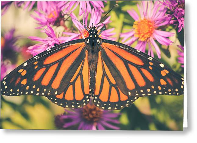 Aster Greeting Cards - Grace and Beauty Greeting Card by Viviana  Nadowski