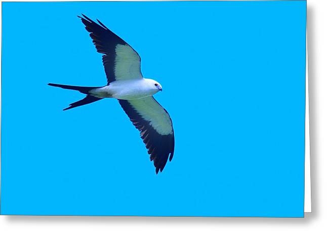 Swallow Tail Greeting Cards - Grace and Majesty Greeting Card by Tony Beck