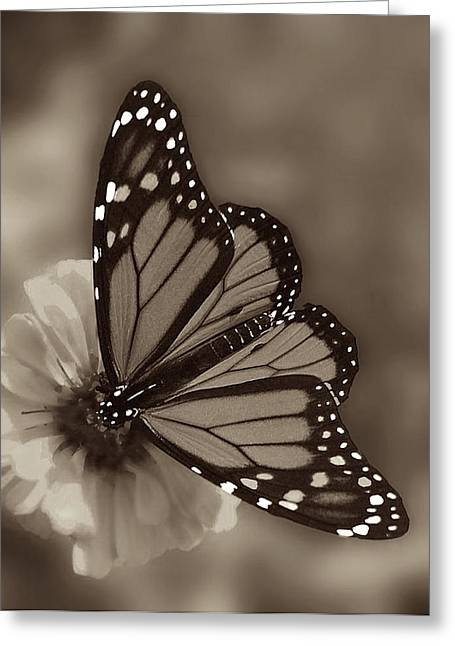 Monarch Greeting Cards - Grace Greeting Card by Don Spenner