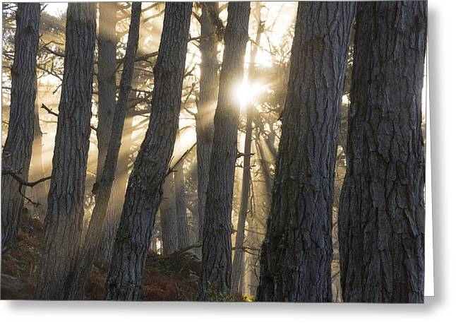 Hwy 1 Greeting Cards - Grace Greeting Card by Dustin  LeFevre