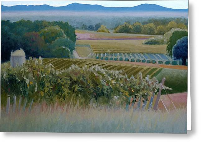 Grace Vineyards No. 1 Greeting Card by Catherine Twomey