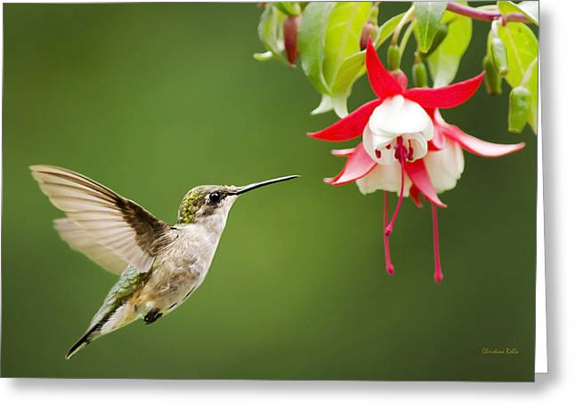 Ruby Throated Hummingbird Wall Art Greeting Cards - Graceful Beauty Greeting Card by Christina Rollo