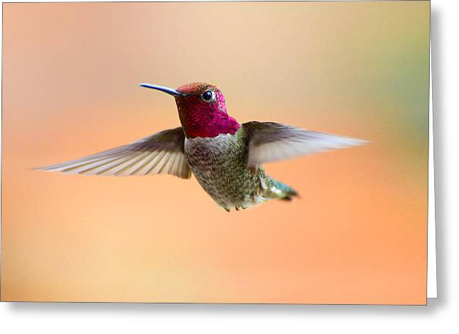 Flying Animal Greeting Cards - Graceful Beauty Greeting Card by Lynn Bauer