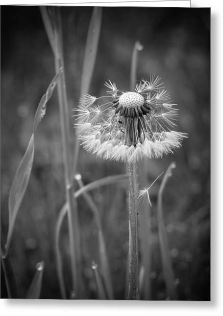 Wisconsin Wildflowers Greeting Cards - Graceful End Greeting Card by Bill Pevlor